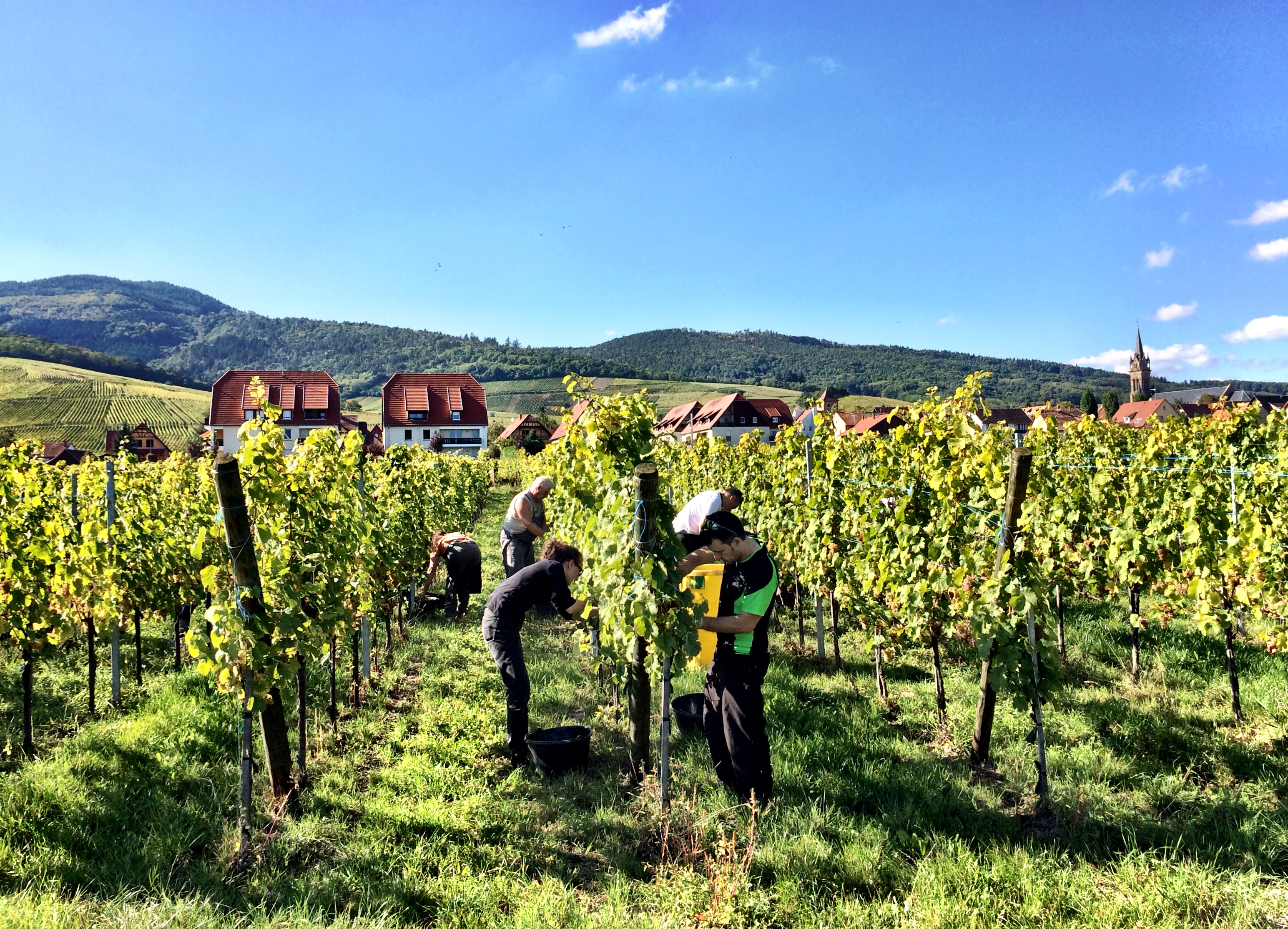 what makes champagne an important region of france It makes every wine different, makes many of them special  by far the largest, the most important,  and the rhône are the best known wine regions of france except for champagne this.
