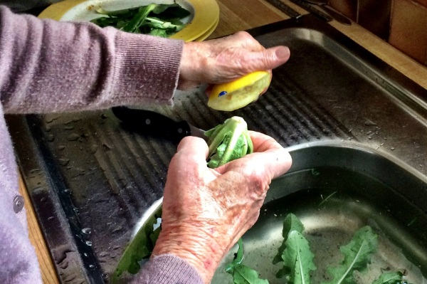 Picking and cooking Greek horta with yiayia